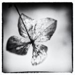 Flower | 5