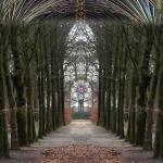 Bomenkathedraal