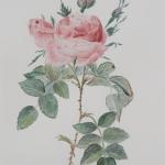 dreiluik roos (1)
