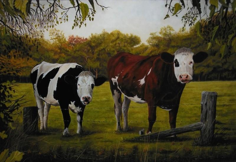 Koeien (55 x 80 cm)