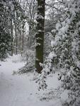 Het bos van Wijckerslooth is voor iedereen toegankelijk. Er staat ook een oorlogsmonument in het bos.