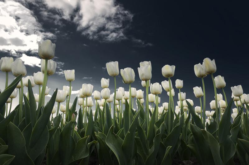 Flower shoot 3