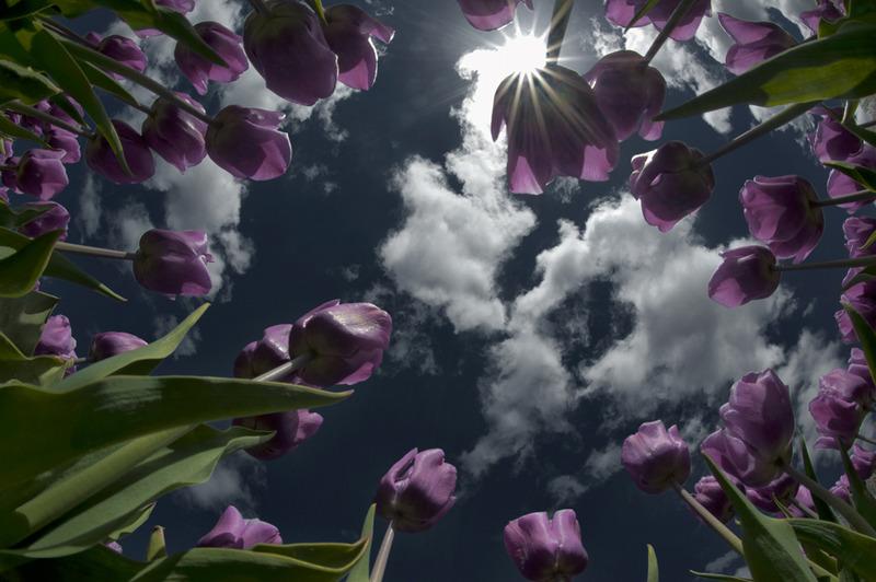 Flower shoot 4