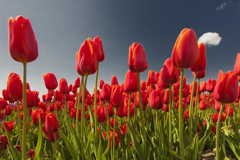 Flower shoot 6