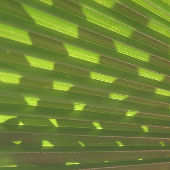 palm leaves 3