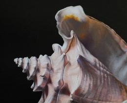 Detail 3 van lantaren en schelpen