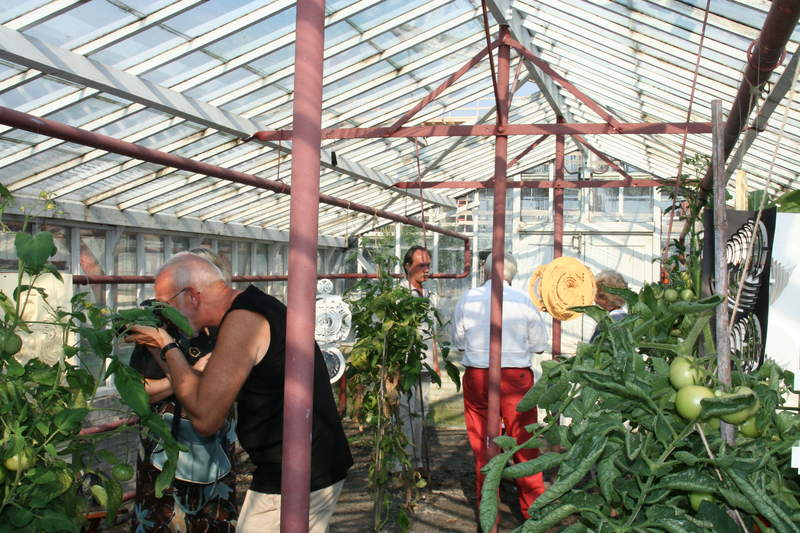 Greenhouse with tomatoes 4