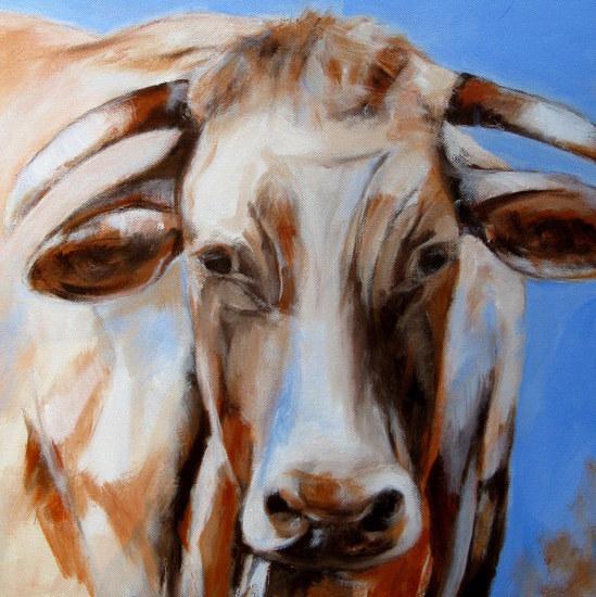 Limousin koe