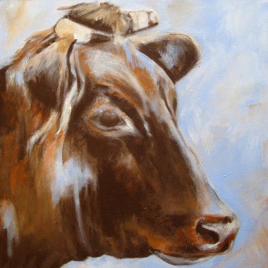 Limousin koe II