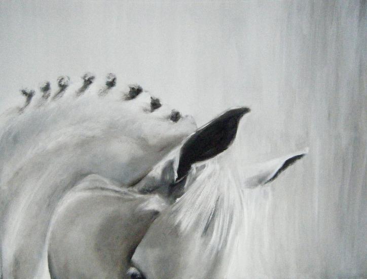 Camargue paard 2