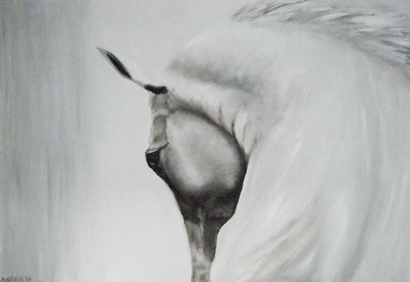 Camargue paard 1