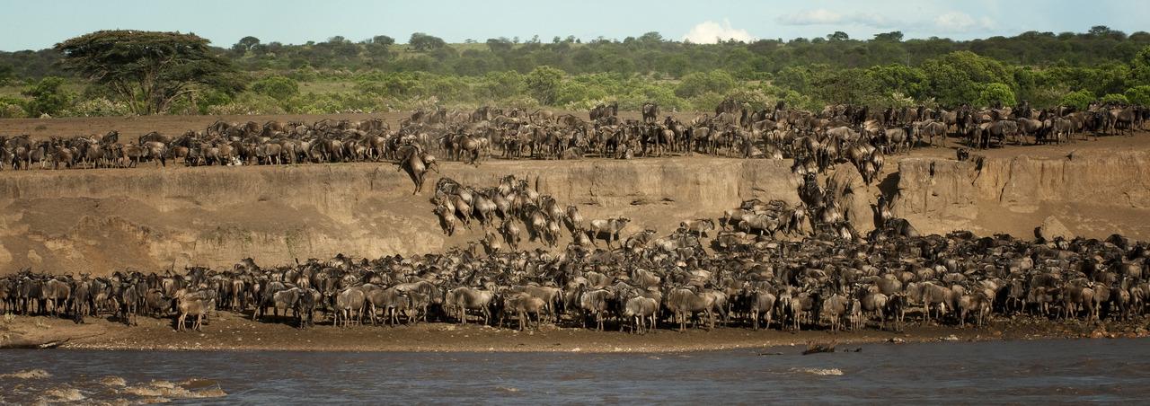 crossing Mara River 1