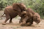 Foto's uit de serie 'A Kiss of Africa'.