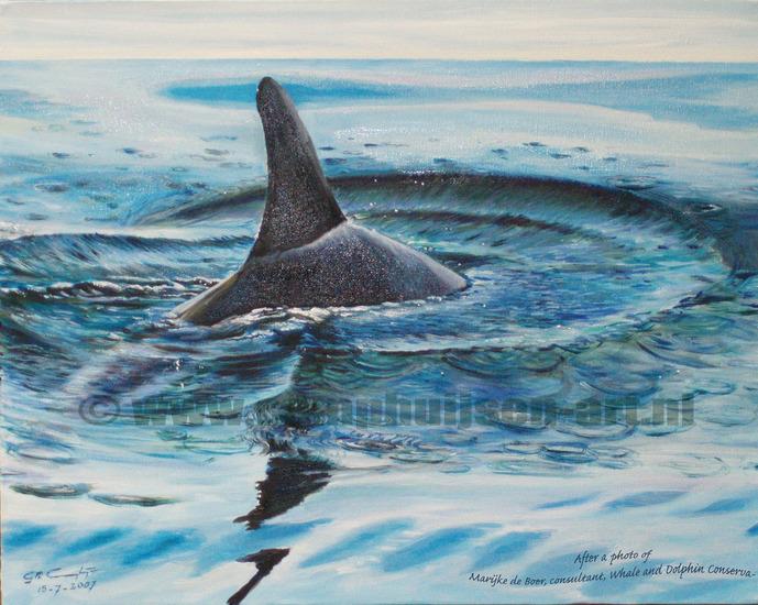 Grijze dolfijn