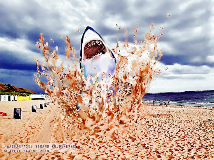 Haai uit het zand