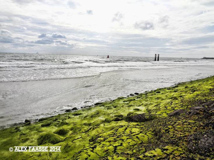 Groene zeewering