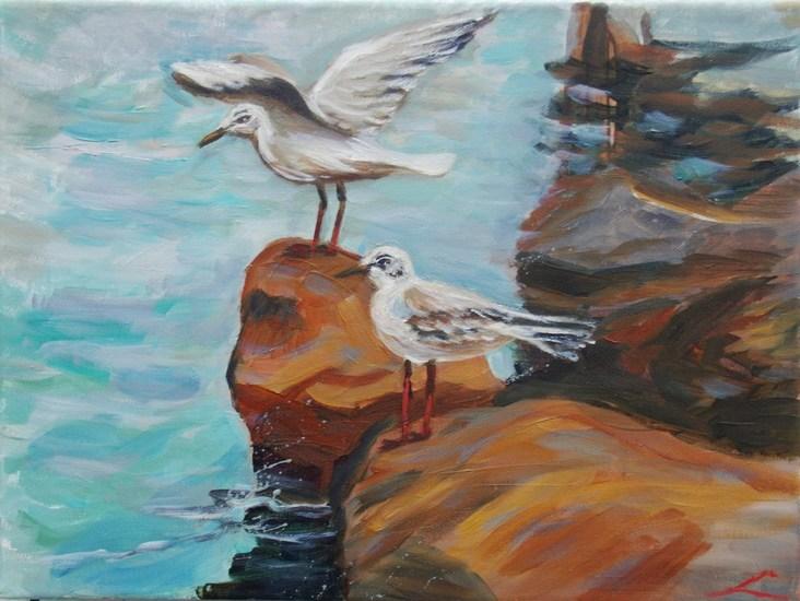 Zeemeeuwen op rotsen