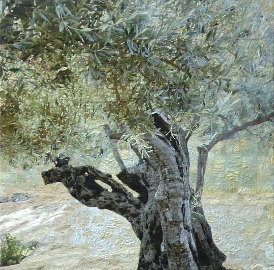 Eeuwenoude olijfboom