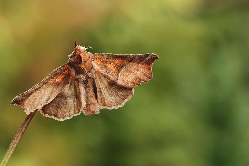 Nachtvlinder2