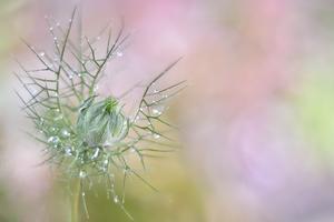 Macro's en Close-ups van bloemen.