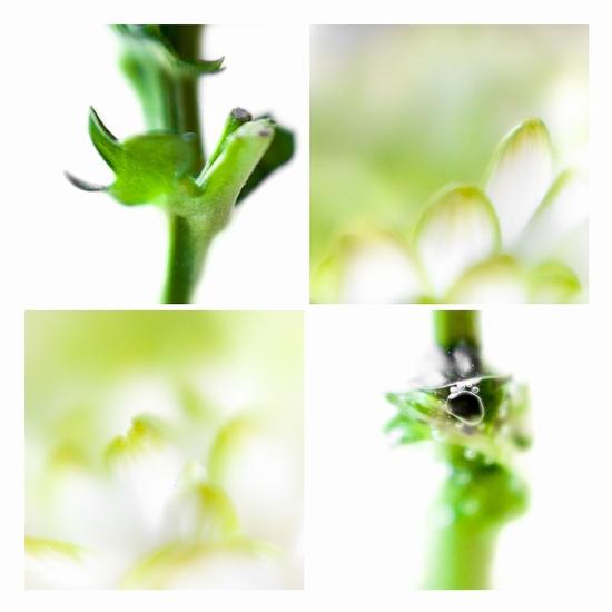 Bloem en groen 1