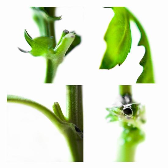 Bloem en groen 2