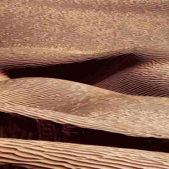 Woestijn 5