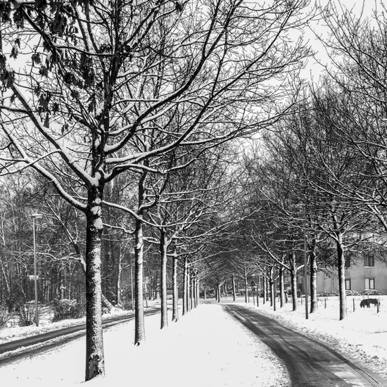 Winter 2015 -1