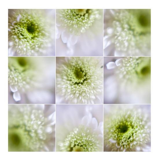 Springflower-scope