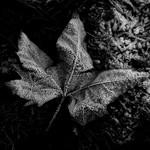 Opnames in zwart/wit (ook abstract, details, landschappen etc)
