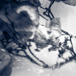 Hortensiabloemenschermpje in bakje water in diepvries gelegd en vervolgens gefotografeerd met een lensbaby (macro)objectief en bewerkt in Lightroom