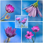 Bloemen gefotografeerd en bewerkt op mijn manier