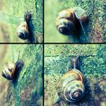 Foto's van een slak