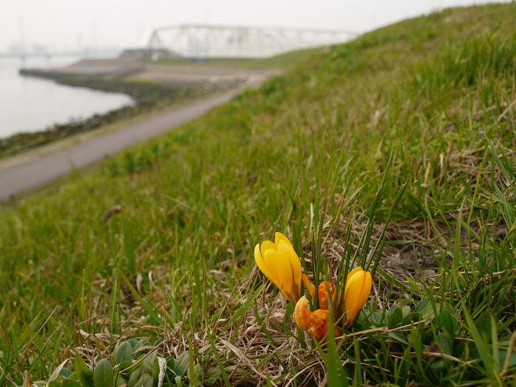 voorjaar bij de Maaslandkering