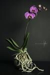 gevangen licht in veelal bloemstillevens
